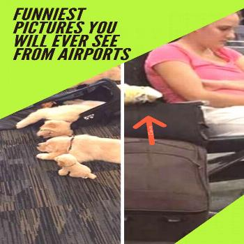 Funniest Pictures You Will Ever See From Airports  Funniest