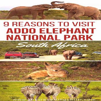 I've been to Addo Elephant Park! It is breath taking to see wild elephants while driving on the t