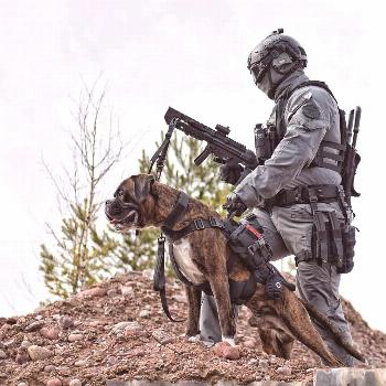 """OneTigris POWER ROCKET K9 Harness """"Just doing some tactical moves with my best combat partner Hec"""
